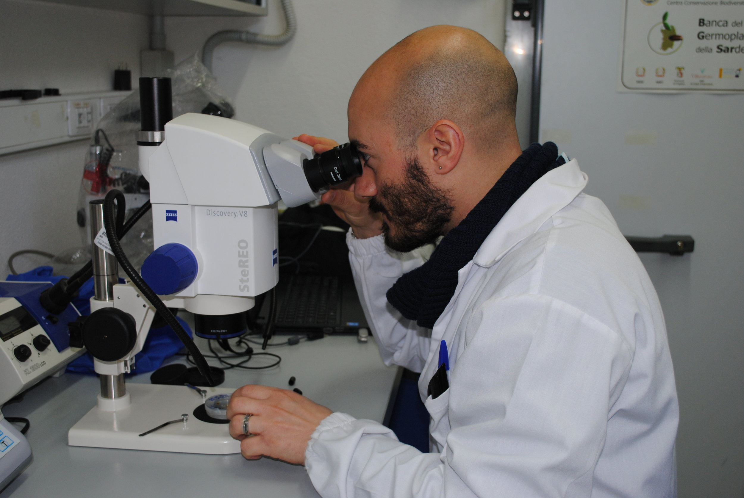 Seed testing (BG-SAR)