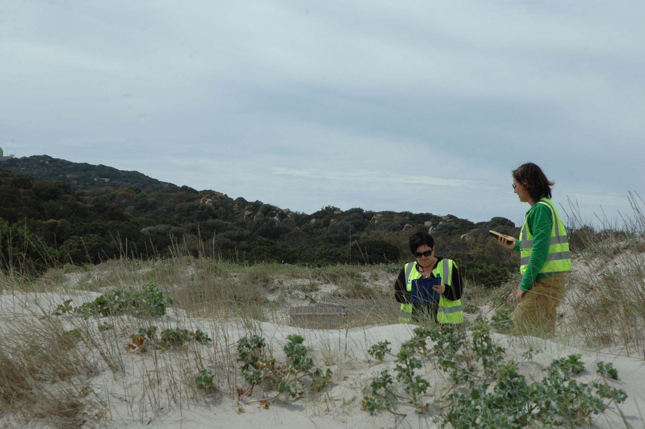 Monitoring of sand dune habitats