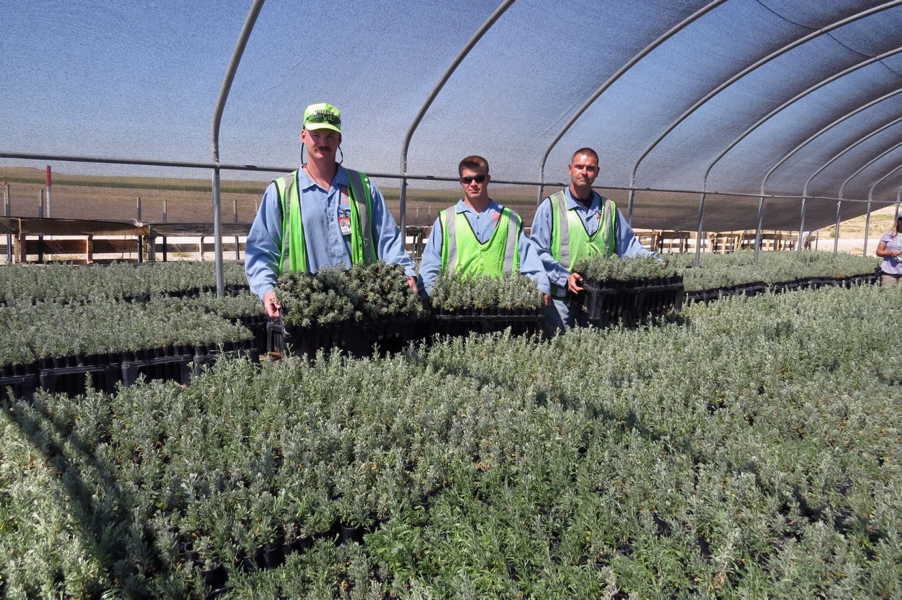 Inmates at Snake River Correctional Institution with some of their 50,000 sagebrush (photo: Nancy DeWitt)