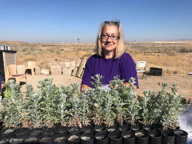 South Boise Women's Correctional Center inmate cares for sagebrush plants (photo: Nancy DeWitt)