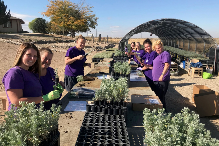 South Boise Women's Correctional Center inmates prepare sagebrush for delivery (photo: Nancy DeWitt