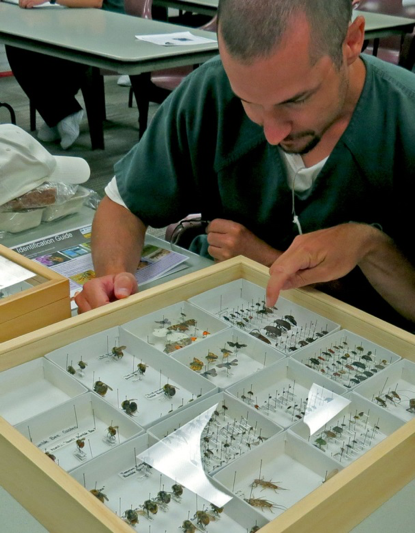 Idaho State Correctional Institution Inmate studies insect as part of the educational series (photo: Nancy DeWitt)