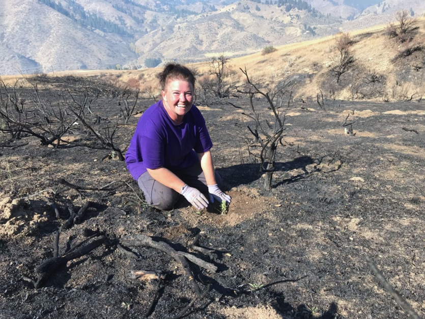 South Boise Women's Correctional Center inmate plants sagebrush on a burn near Boise, ID (photo: Nancy DeWitt)
