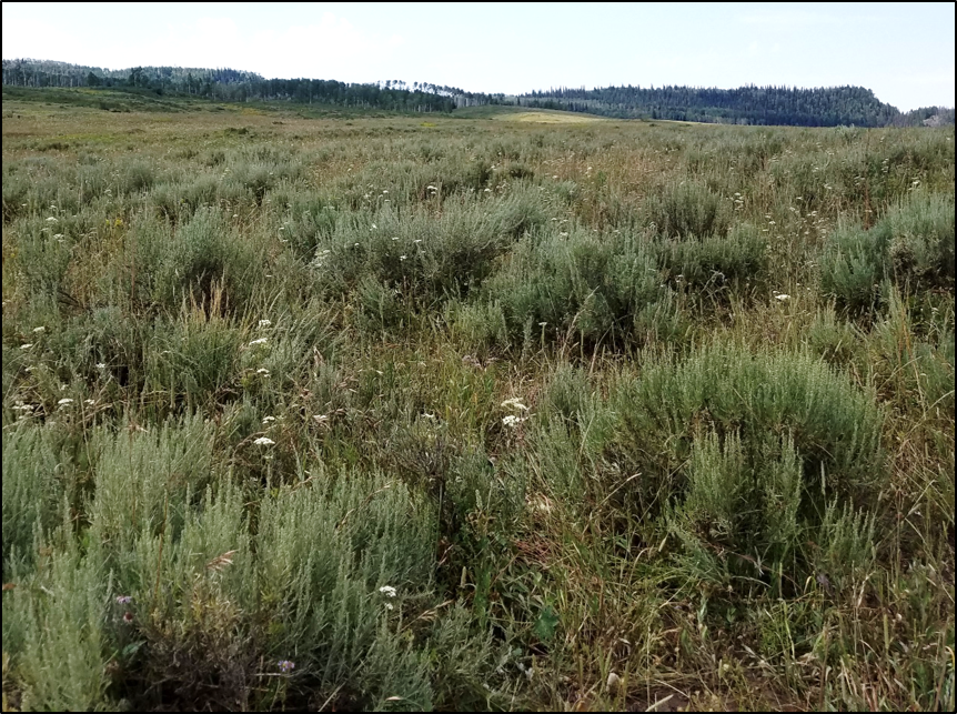 Reference site number 3 – in an objective condition of ~35% shrub cover and a diverse understory.