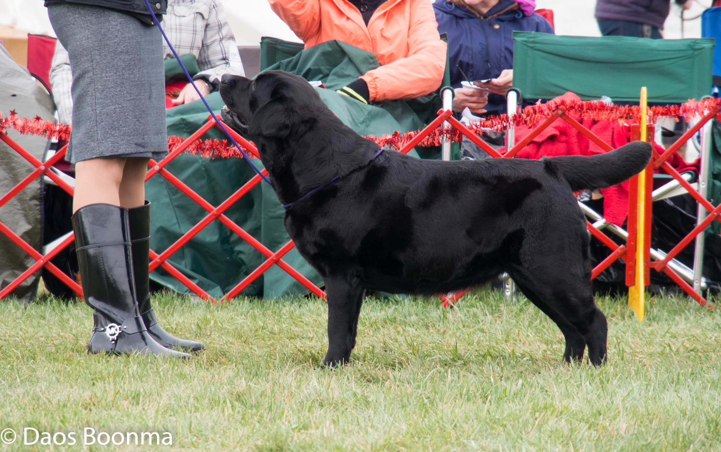 MBISS Bronze GCH CH Amethyst Twas The Night After