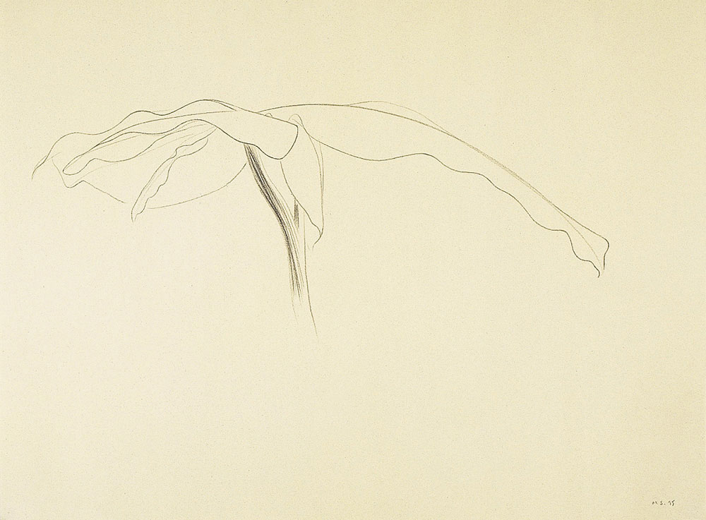 Alta Costura 2, 1995. Graphite / paper. 50 x 70 cm