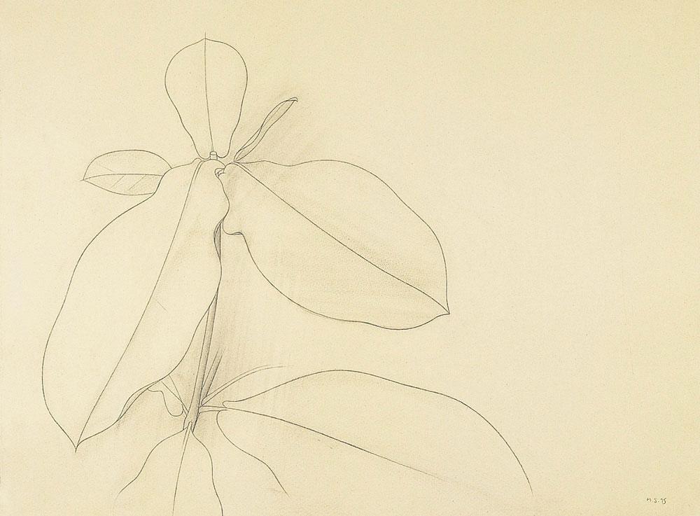 Morena, 1995. Graphite / paper. 50 x 70 cm