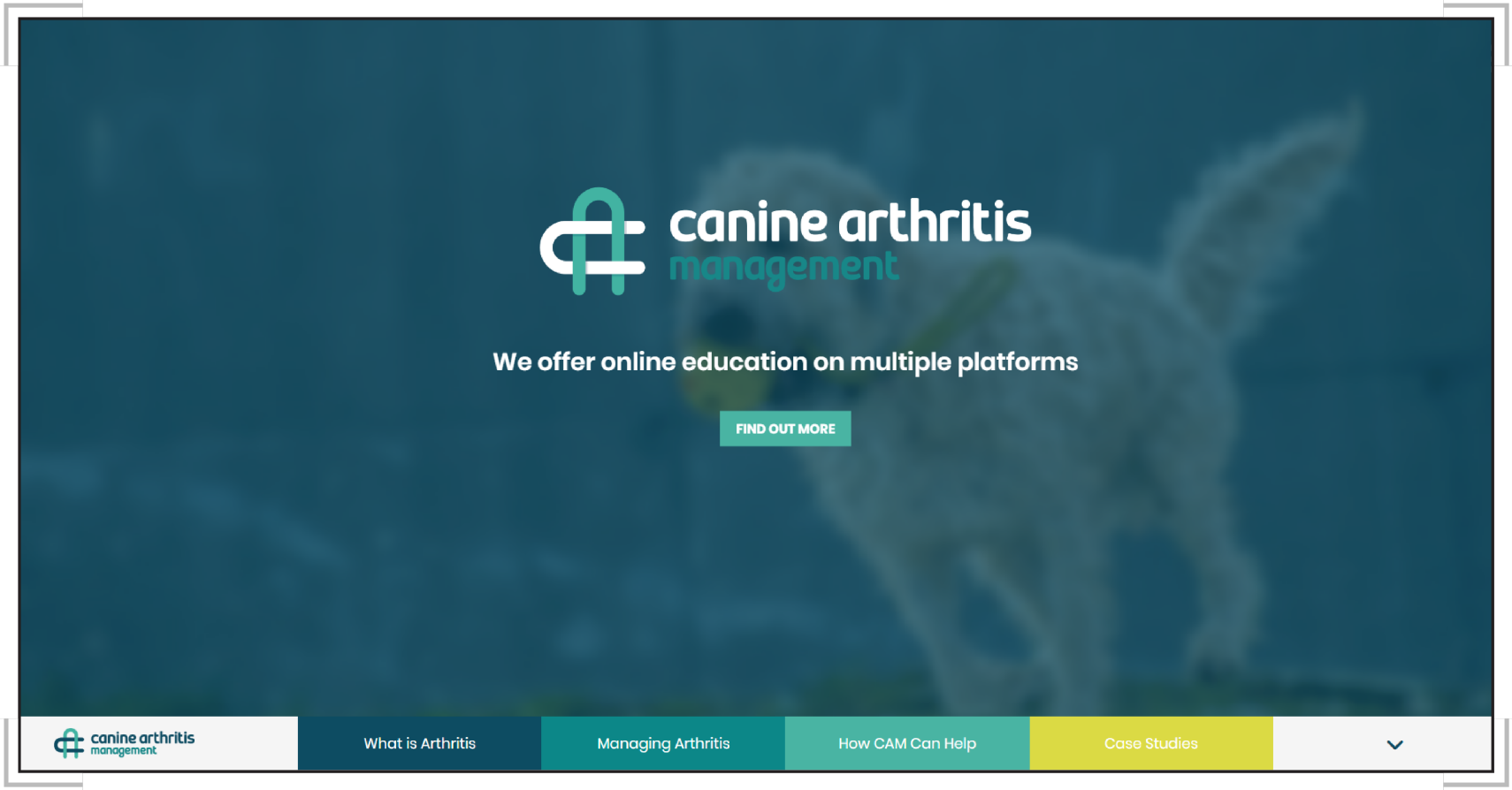 canine_arthritis.png