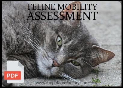 feline_assessment.png