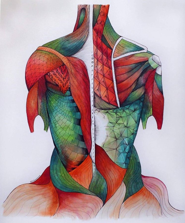 "Rachelle Wunderink's :  ""anatomy: muscles""  pen and gouache on paper, 2016"