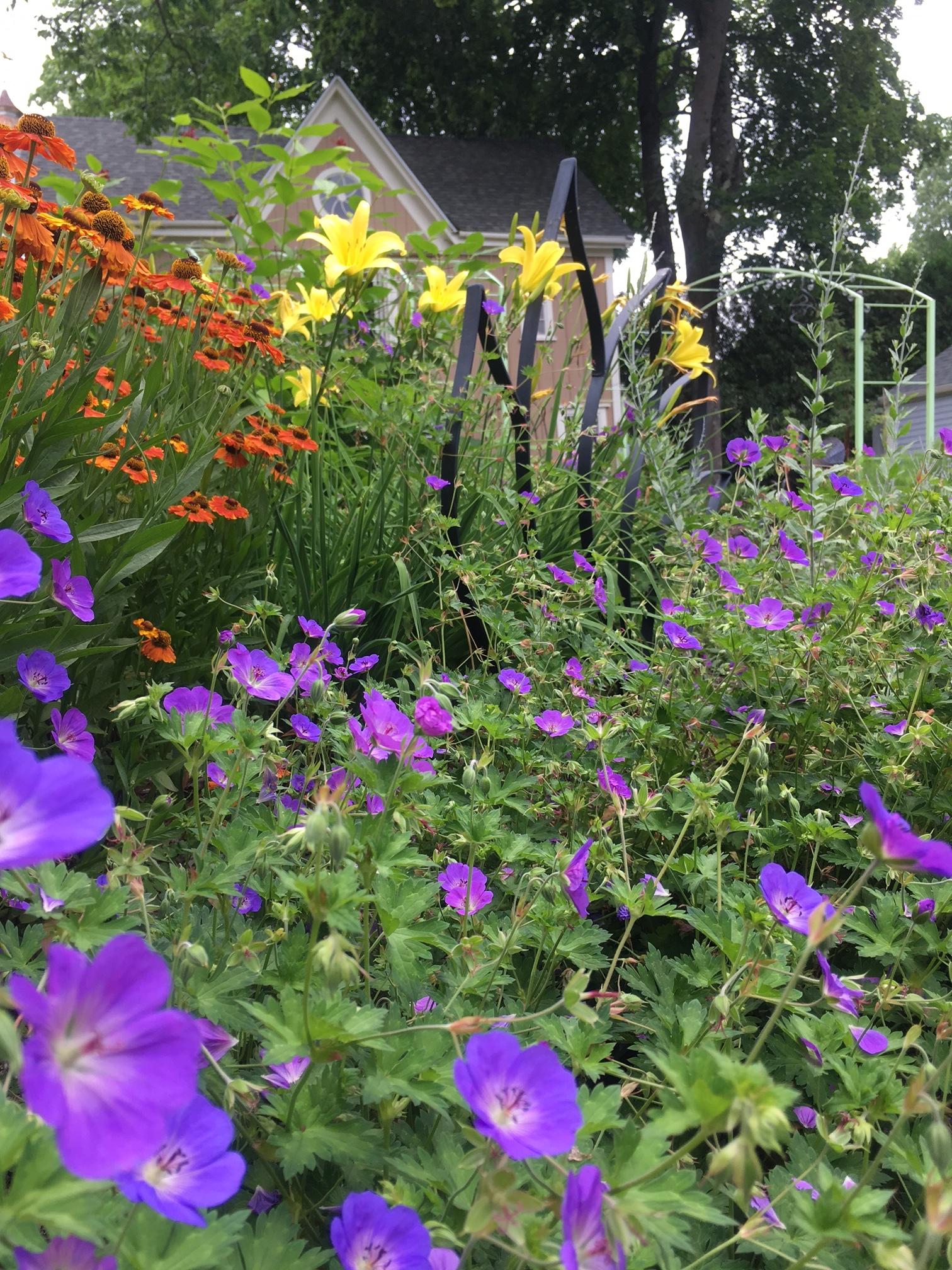 Midsummer color