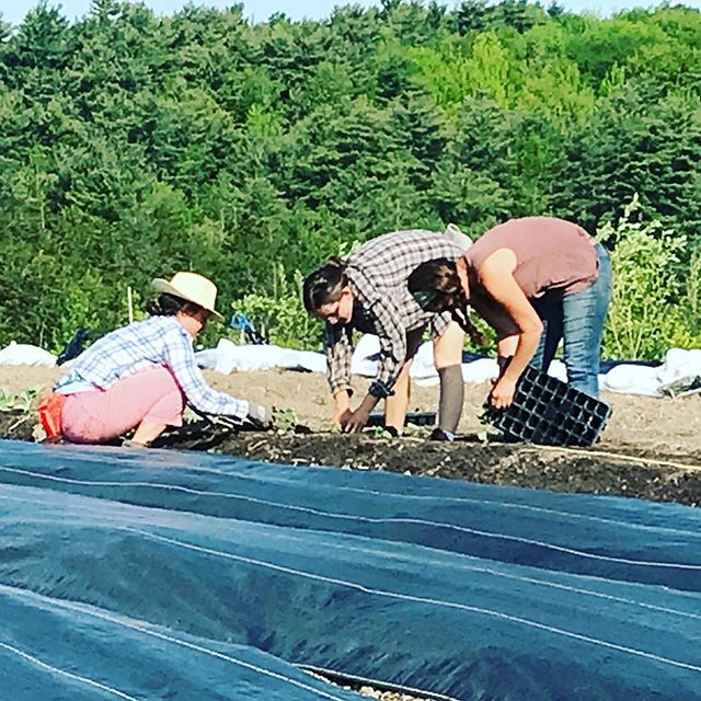 Early morning work, catch the sun while we can #philoridgefarm #regenerativeagriculture
