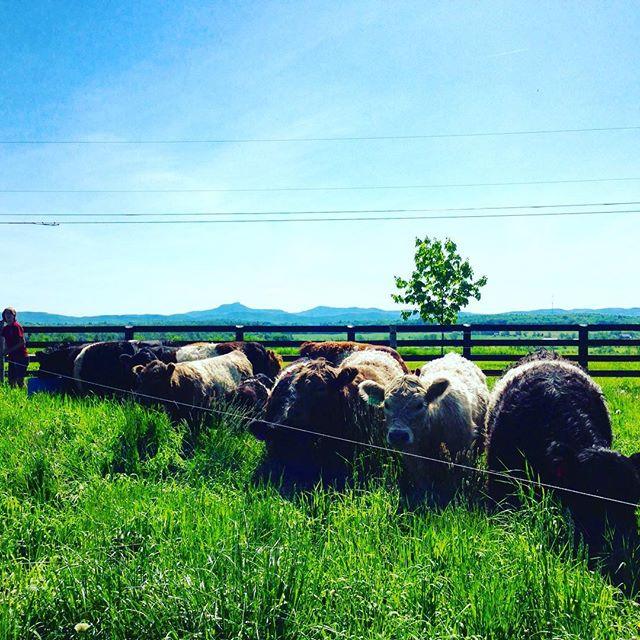 Vermont afternoon @philoridgefarm