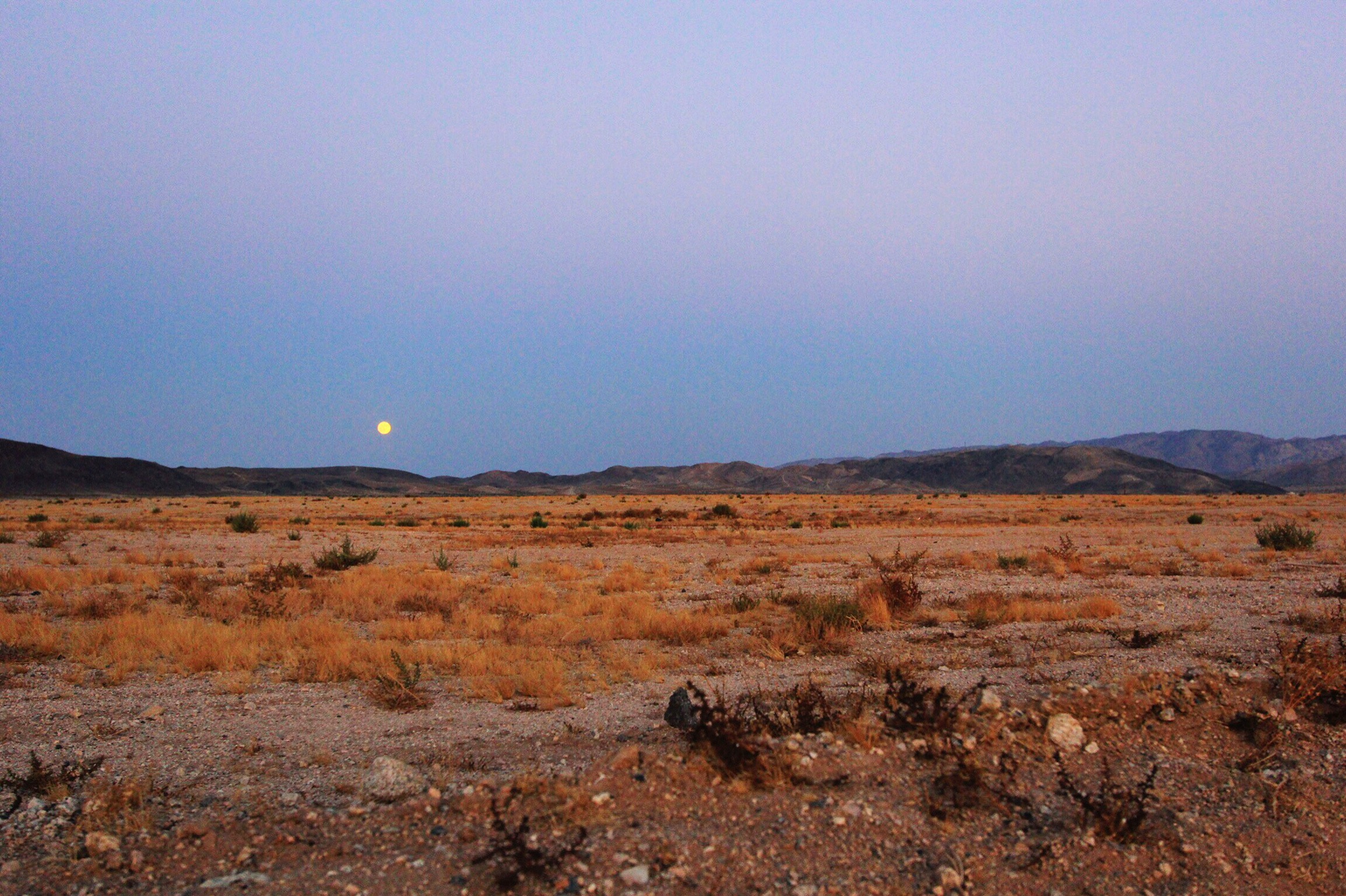 The most spectacular moon I've ever seen over the desert in Joshua Tree (the night before the Harvest Moon)