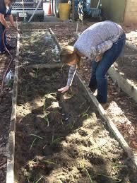 Garden Club - Plants & Fertilizer