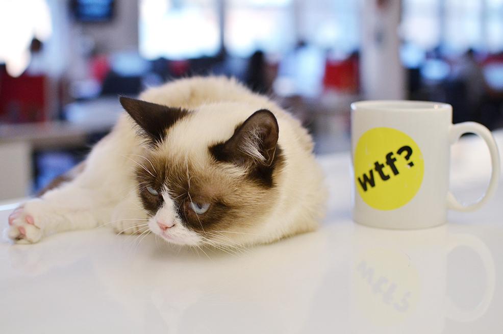 buzzcat.jpg