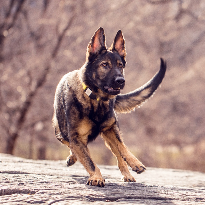 home-on-dog.jpg