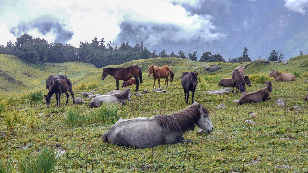 india_caballos.jpg