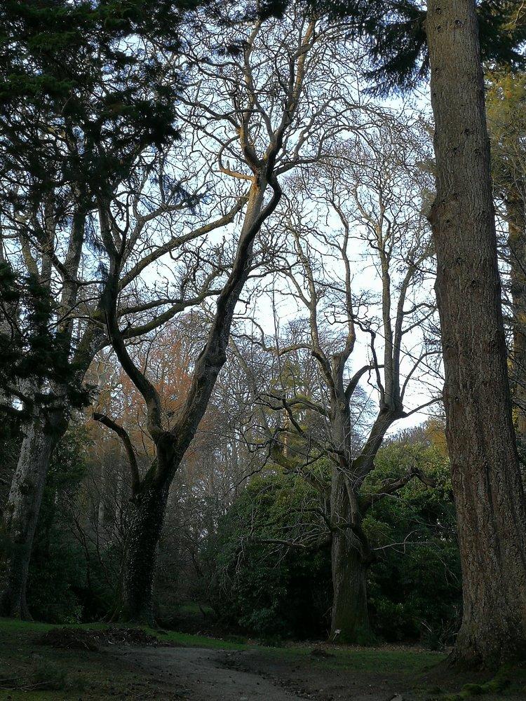 trees ireland.jpg