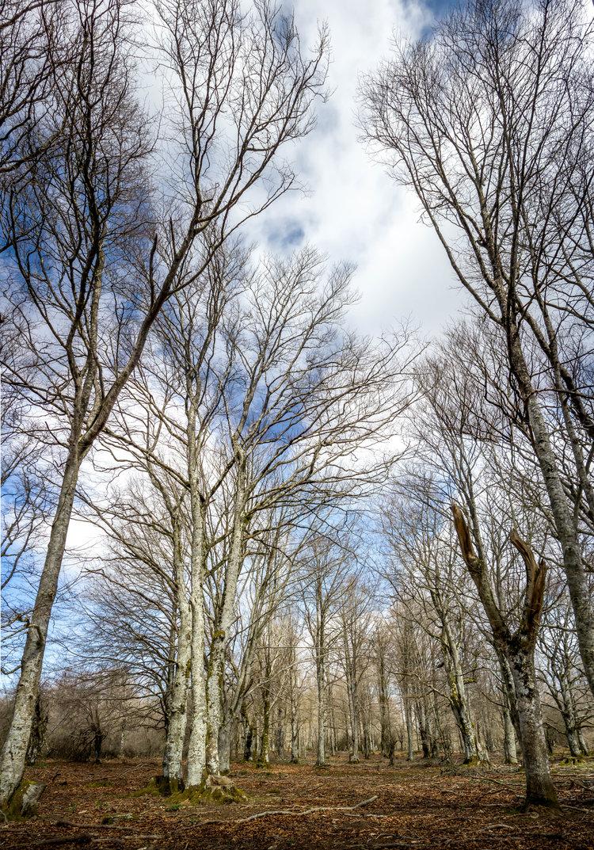 España_árboles.jpg
