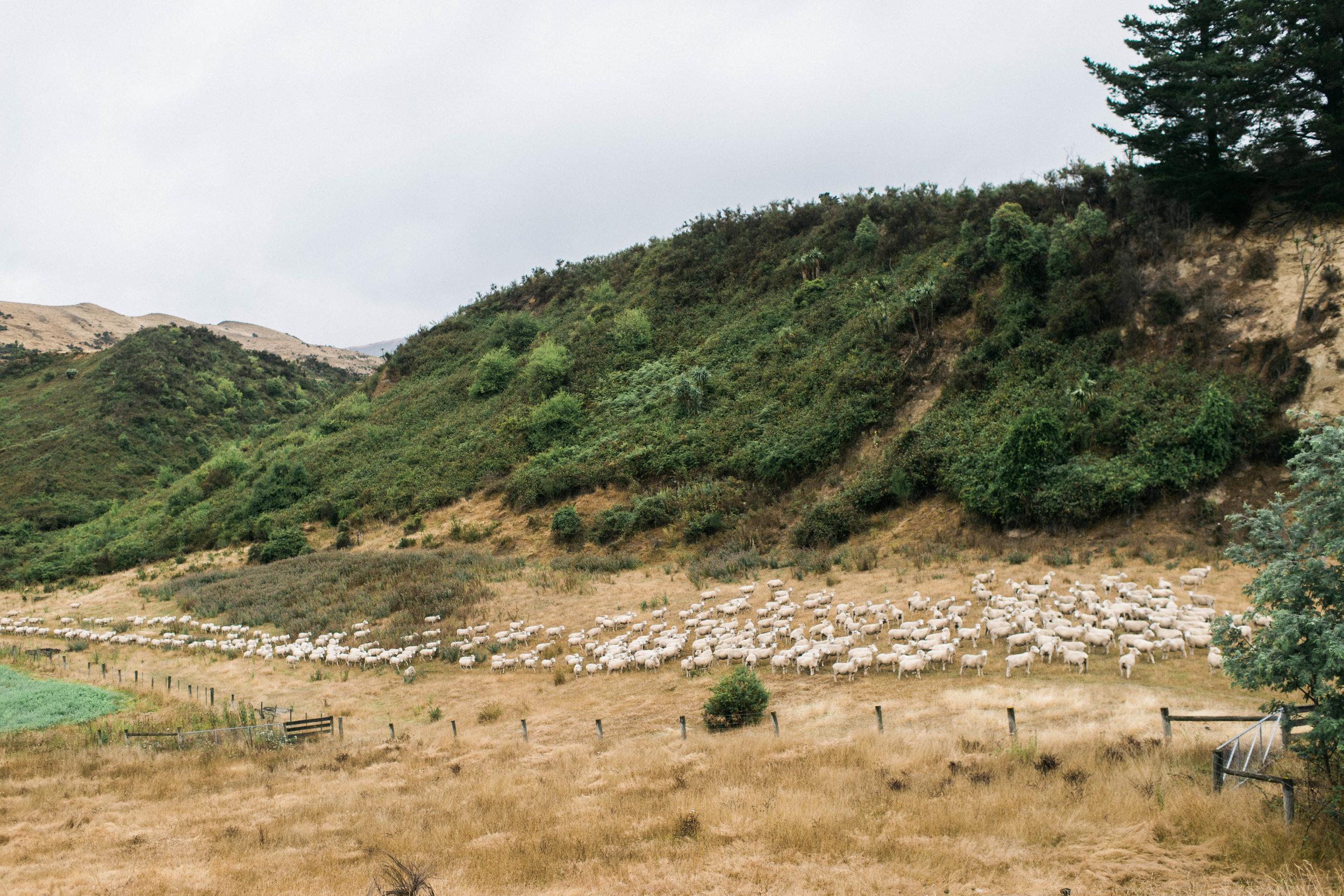 Neuseeland_DieHochzeitsfotografen_58.jpg