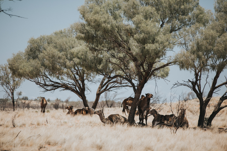 Outback(95von211).jpg