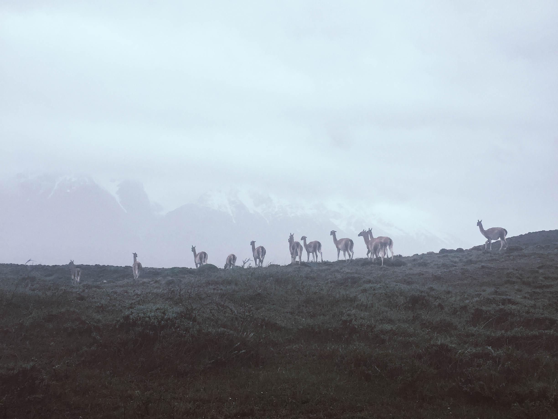 Patagonien_Torres+del+Paine_JocelyneBueckner_9.jpg