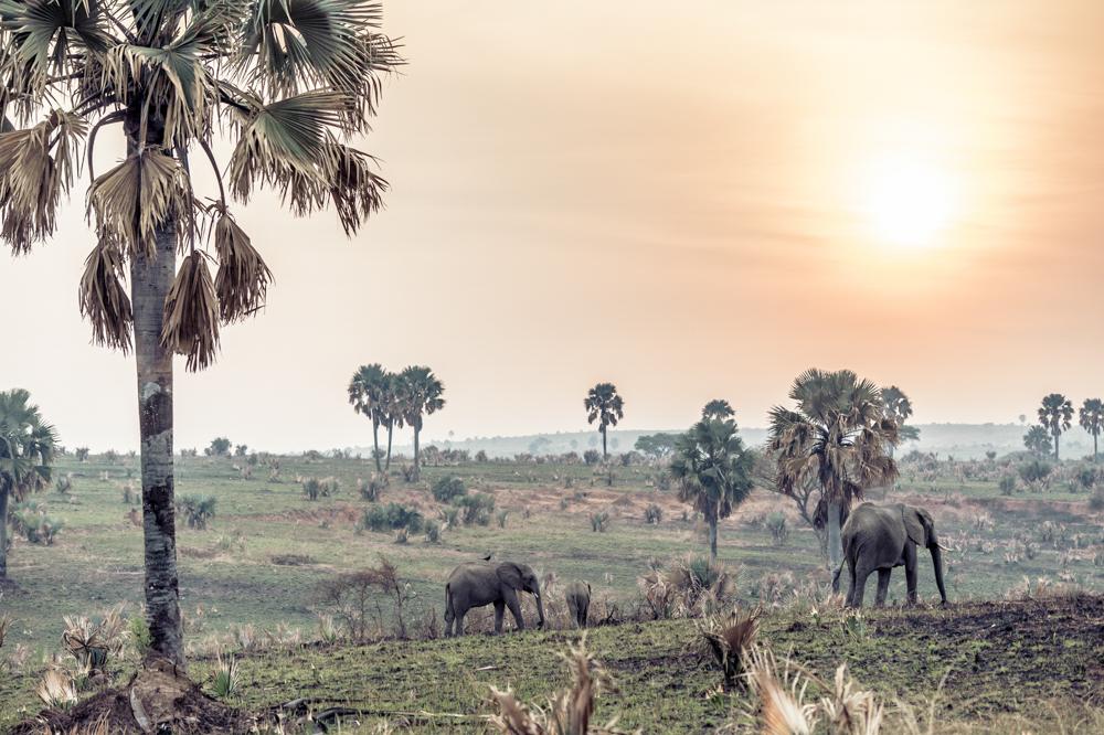 Uganda chris frumolt 2015-30.jpg