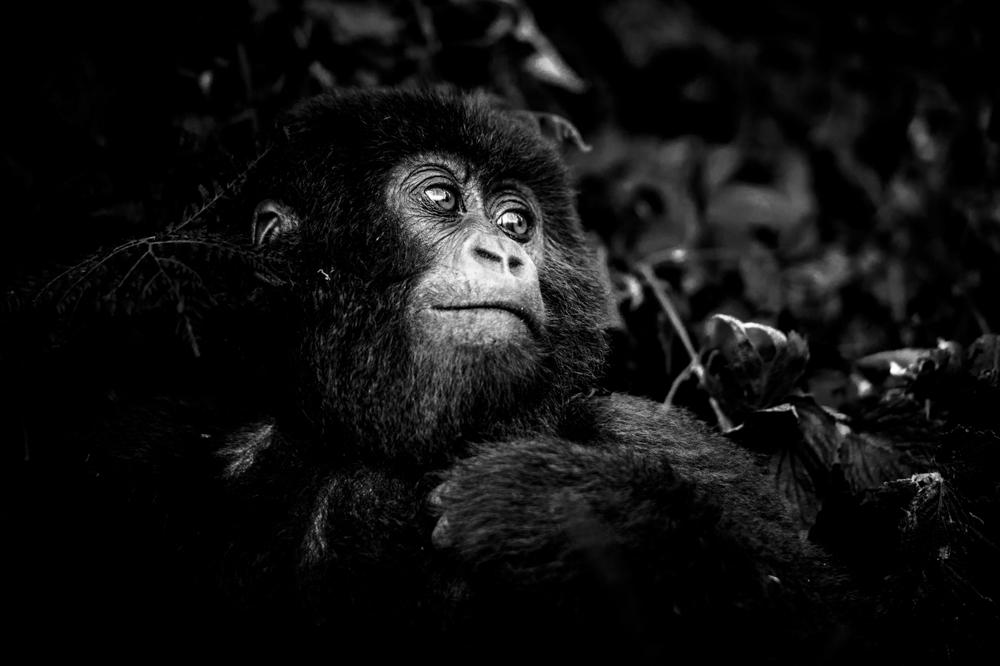 Ruanda chris frumolt 2015-41.jpg