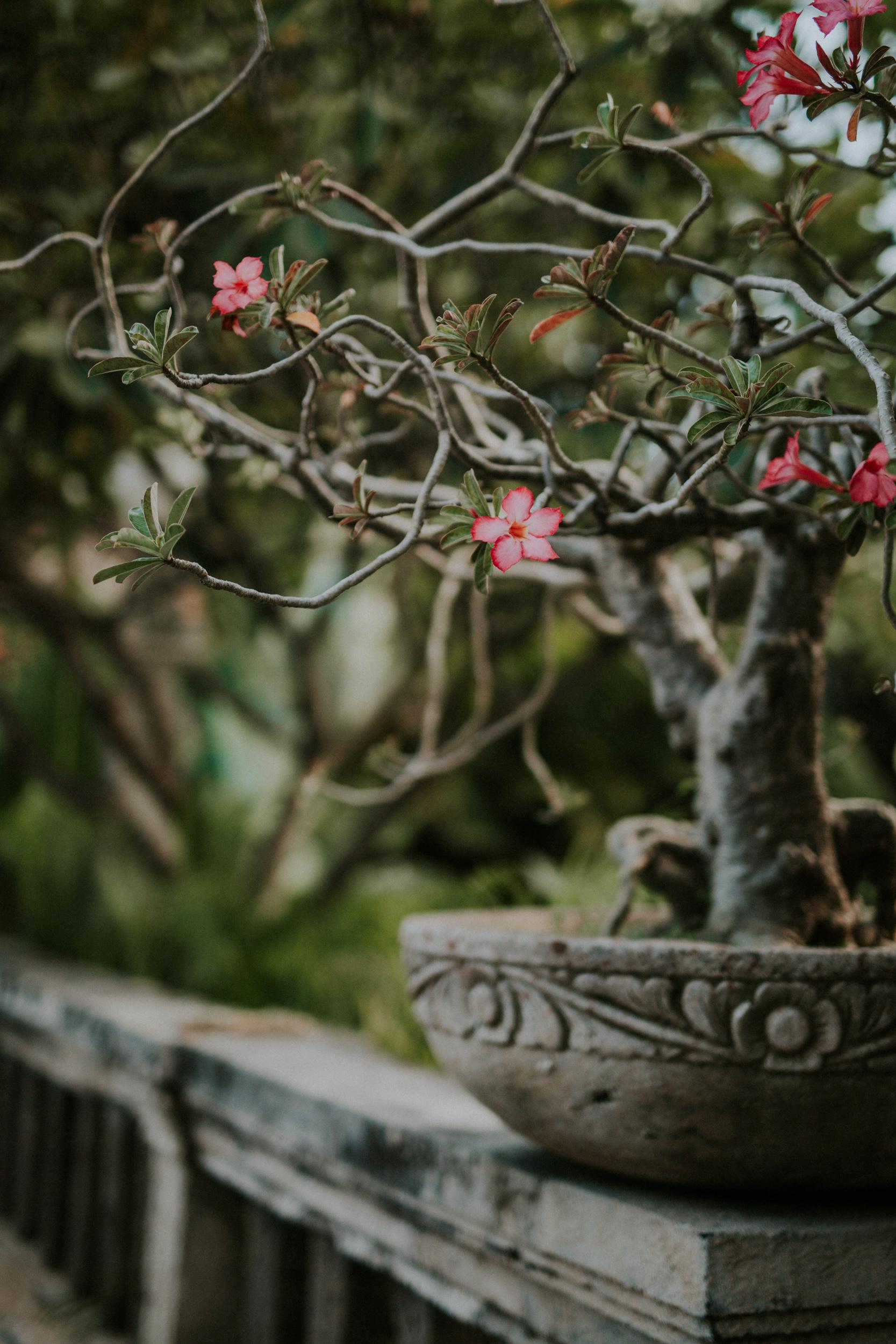 Fernweh_Bali (81).JPG