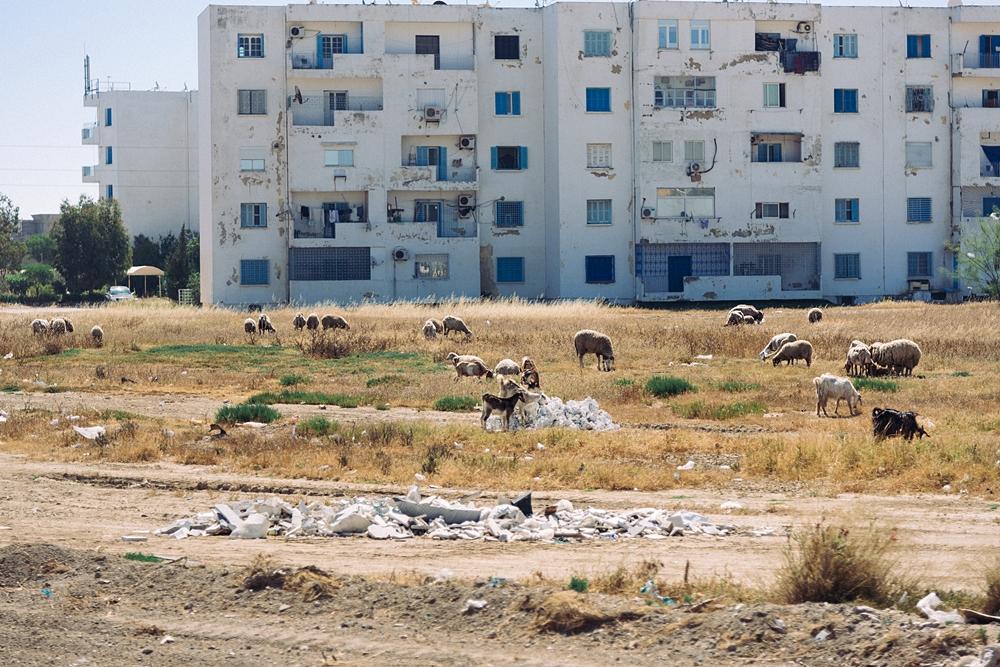 Tunesien-34skaliertneu.jpg
