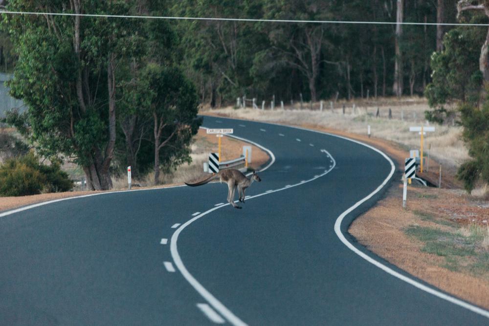Australia_melina (81 von 88).jpg