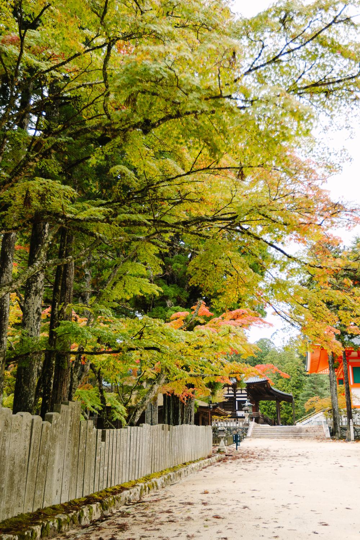 Japan_Aline_0193.jpg