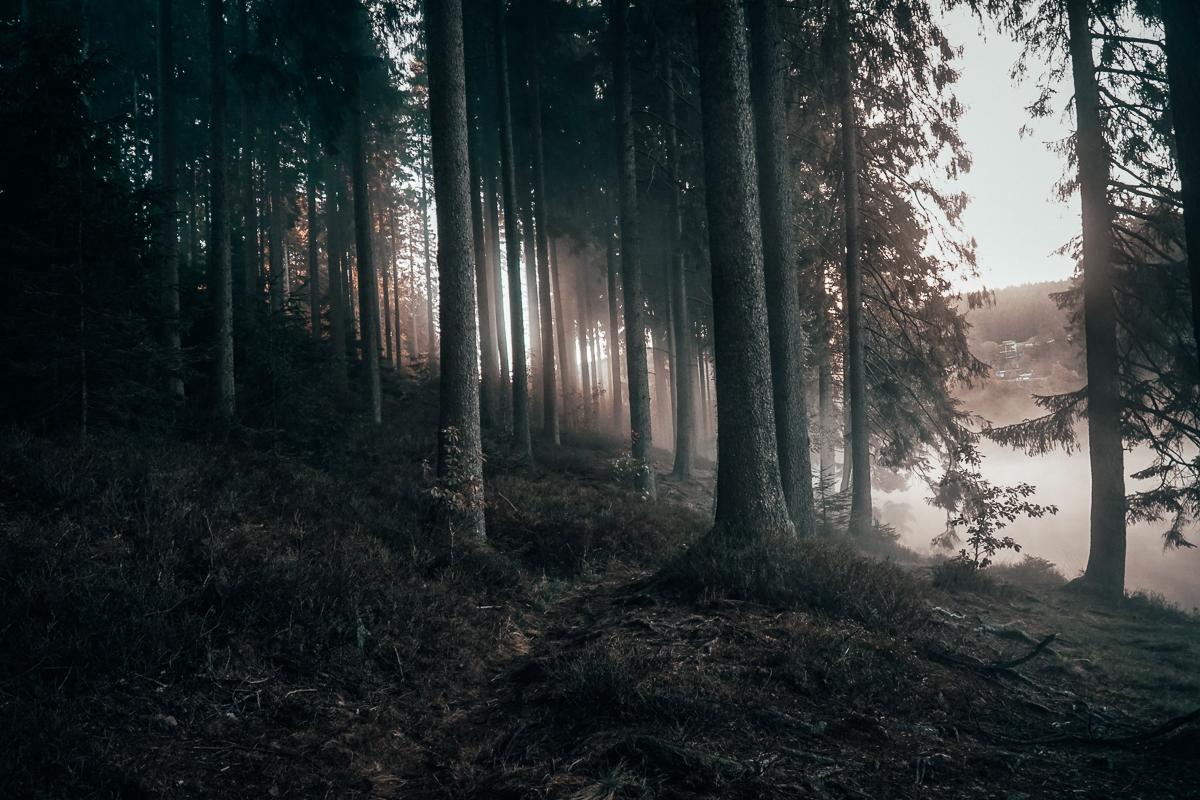 Herbst Hahnenklee_5.jpg