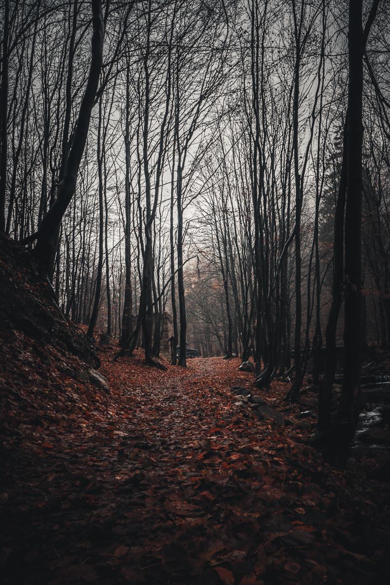 Herbst Ilsetal_1.jpg