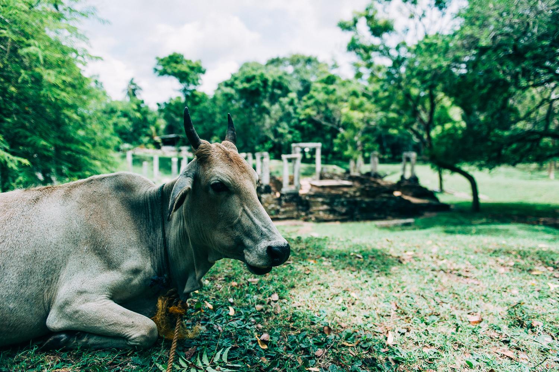 Srilkanka-9635.jpg