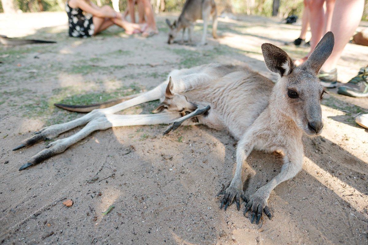 15 Australien Horizons Kangaroo Sanctuary 8.jpg
