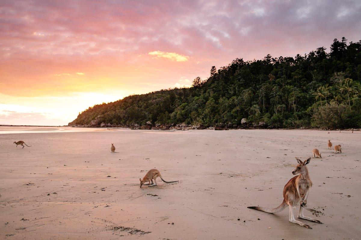09 Australien-Cape Hillsborough 1.jpg