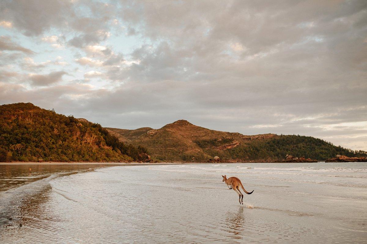 09 Australien-Cape Hillsborough 4.jpg