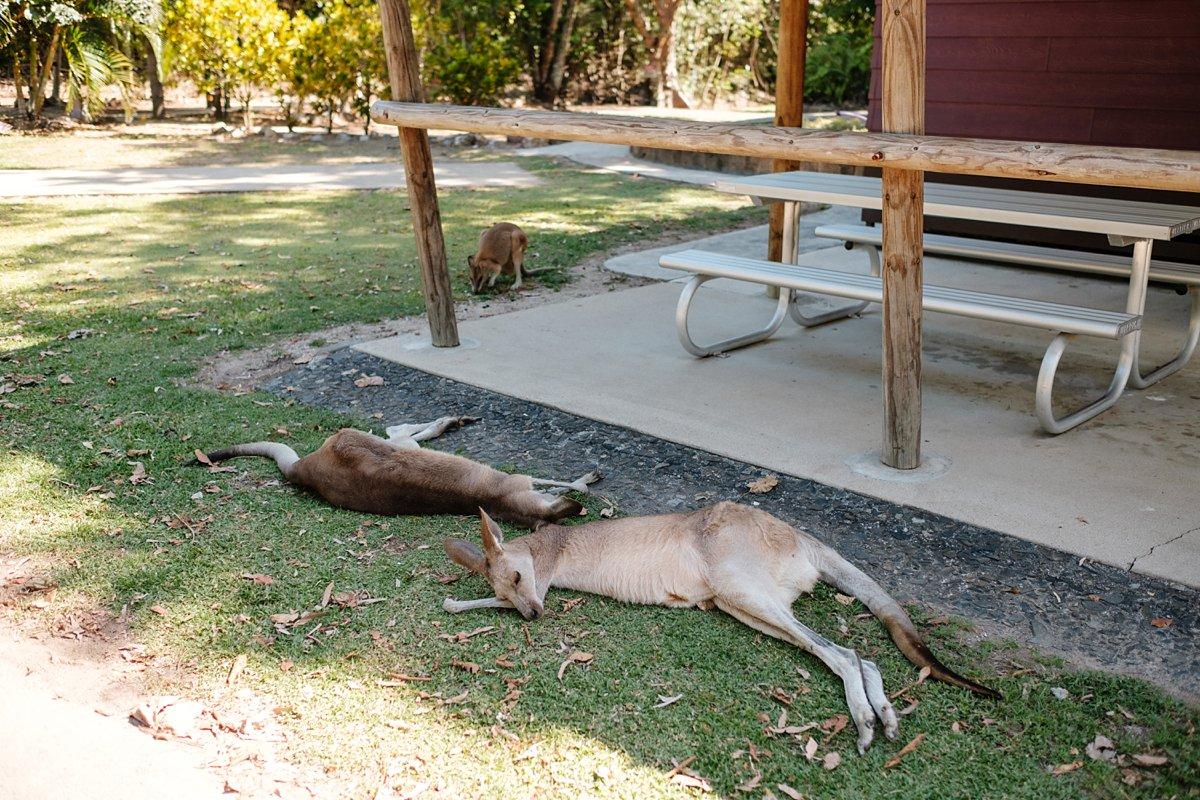 09 Australien-Cape Hillsborough 16.jpg