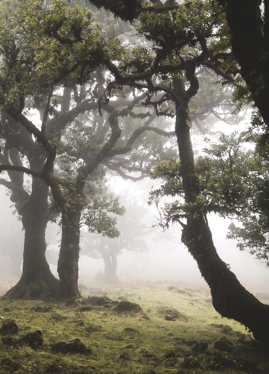 Nebelwald3.jpeg