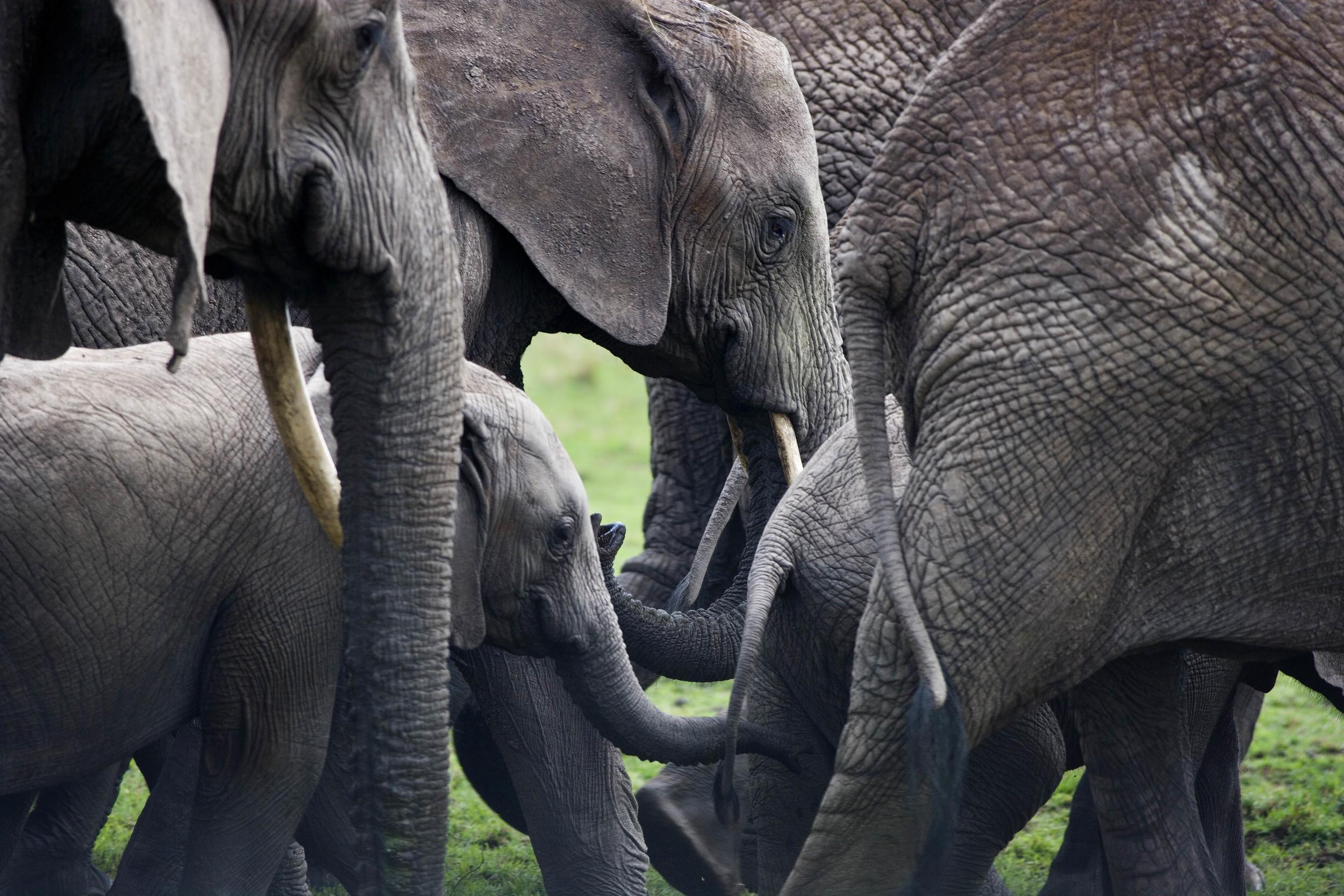 Elephant Group Kenya