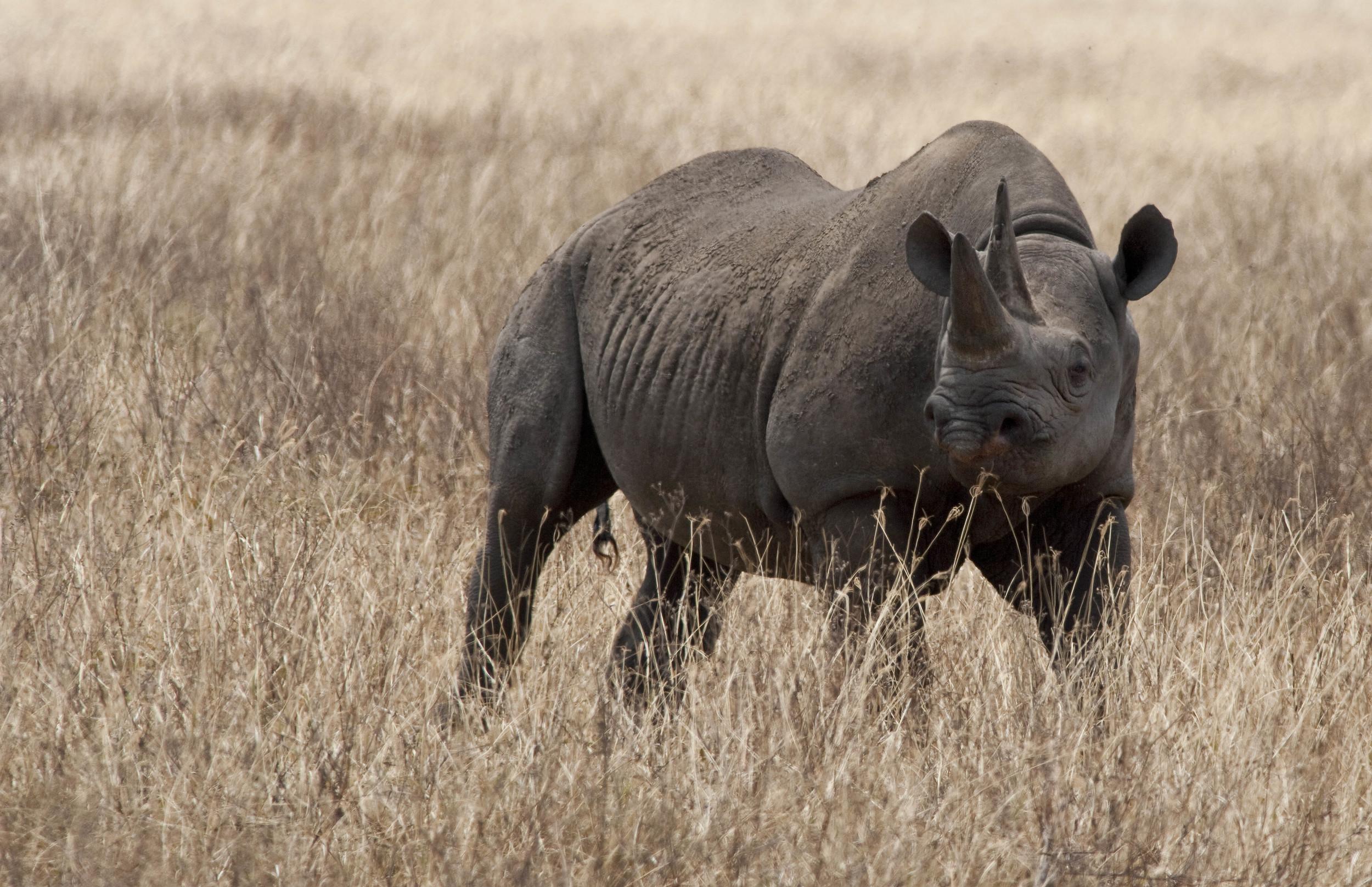 Rhino Tanzania