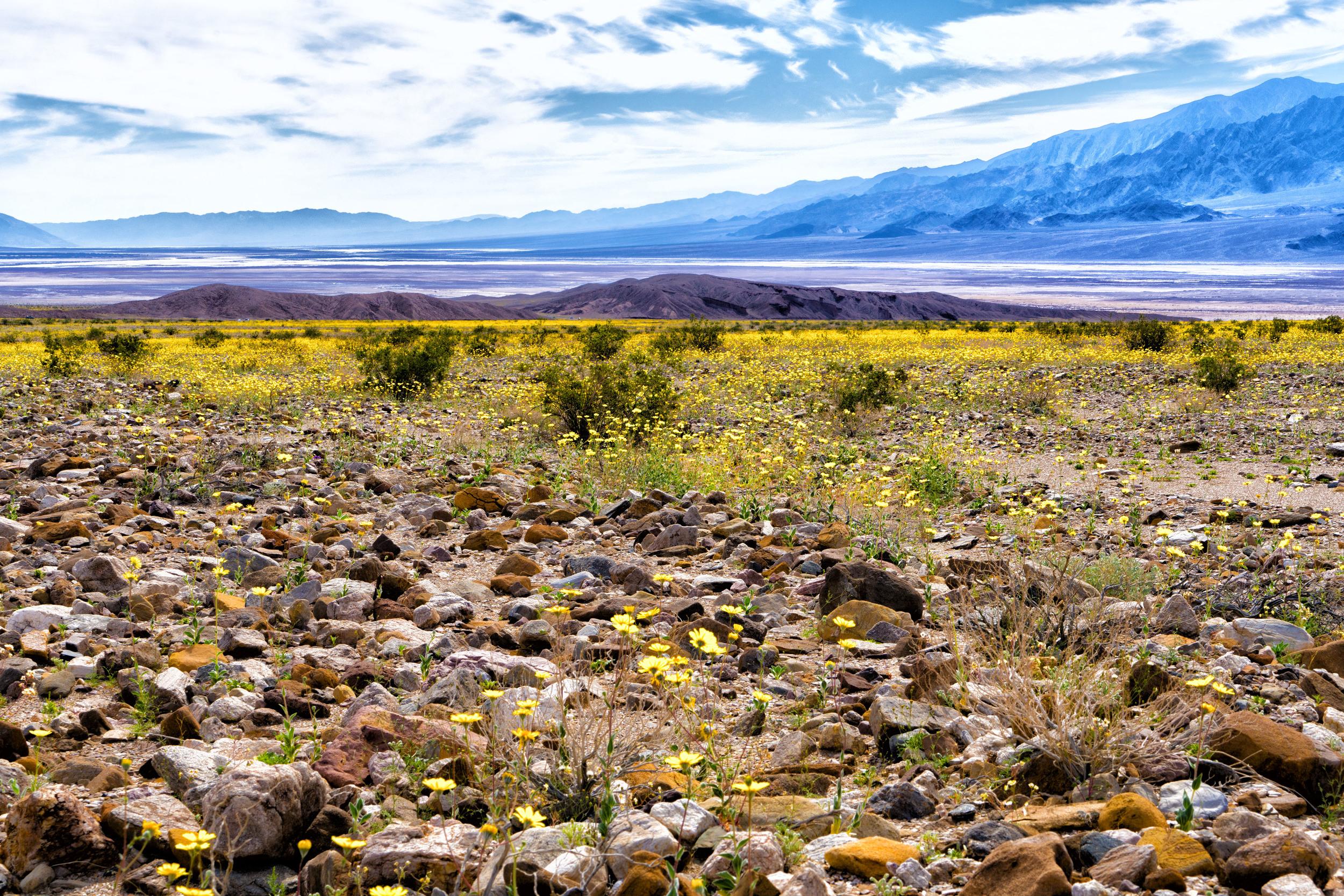 Spring Death Valley National Park, California