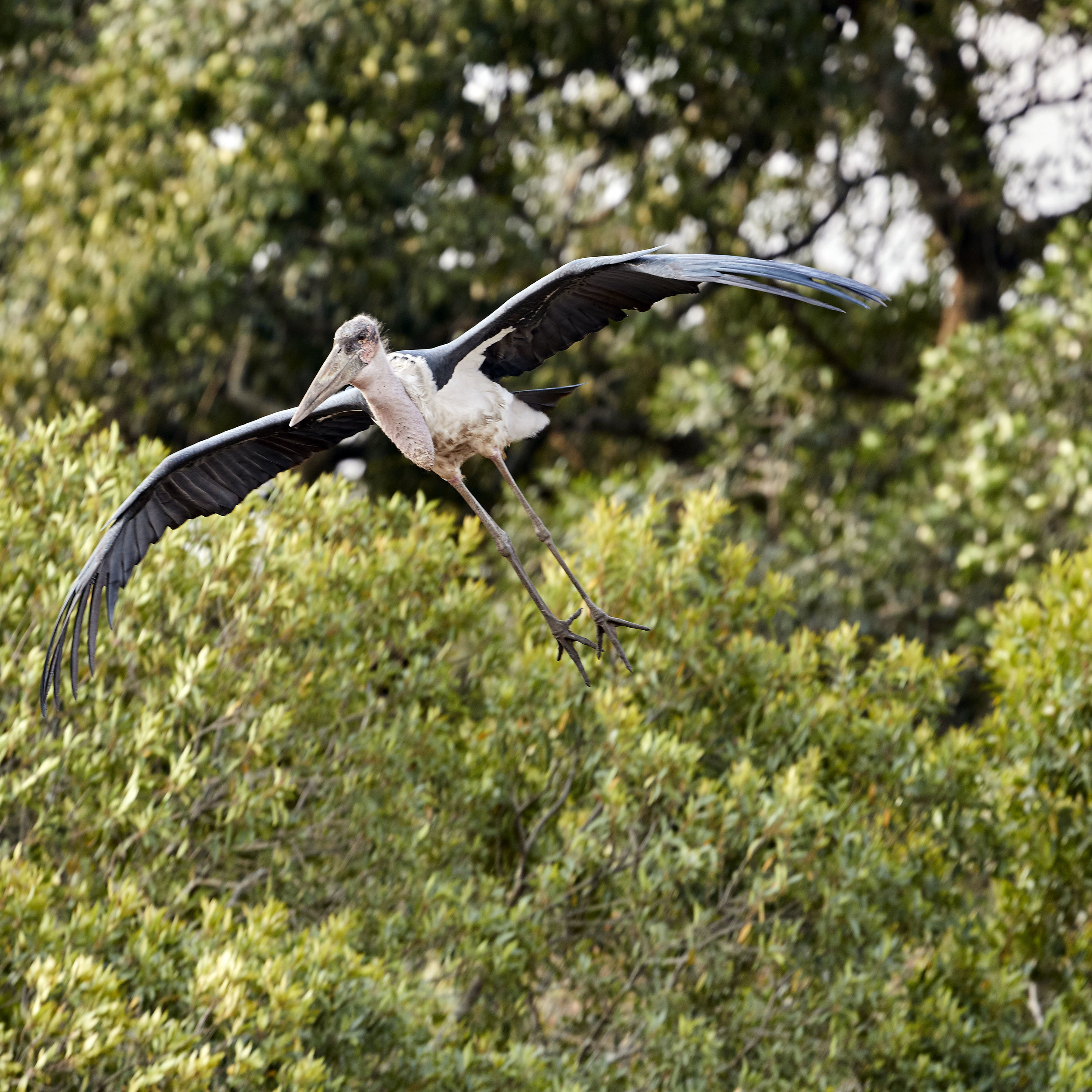 Stork Kenya