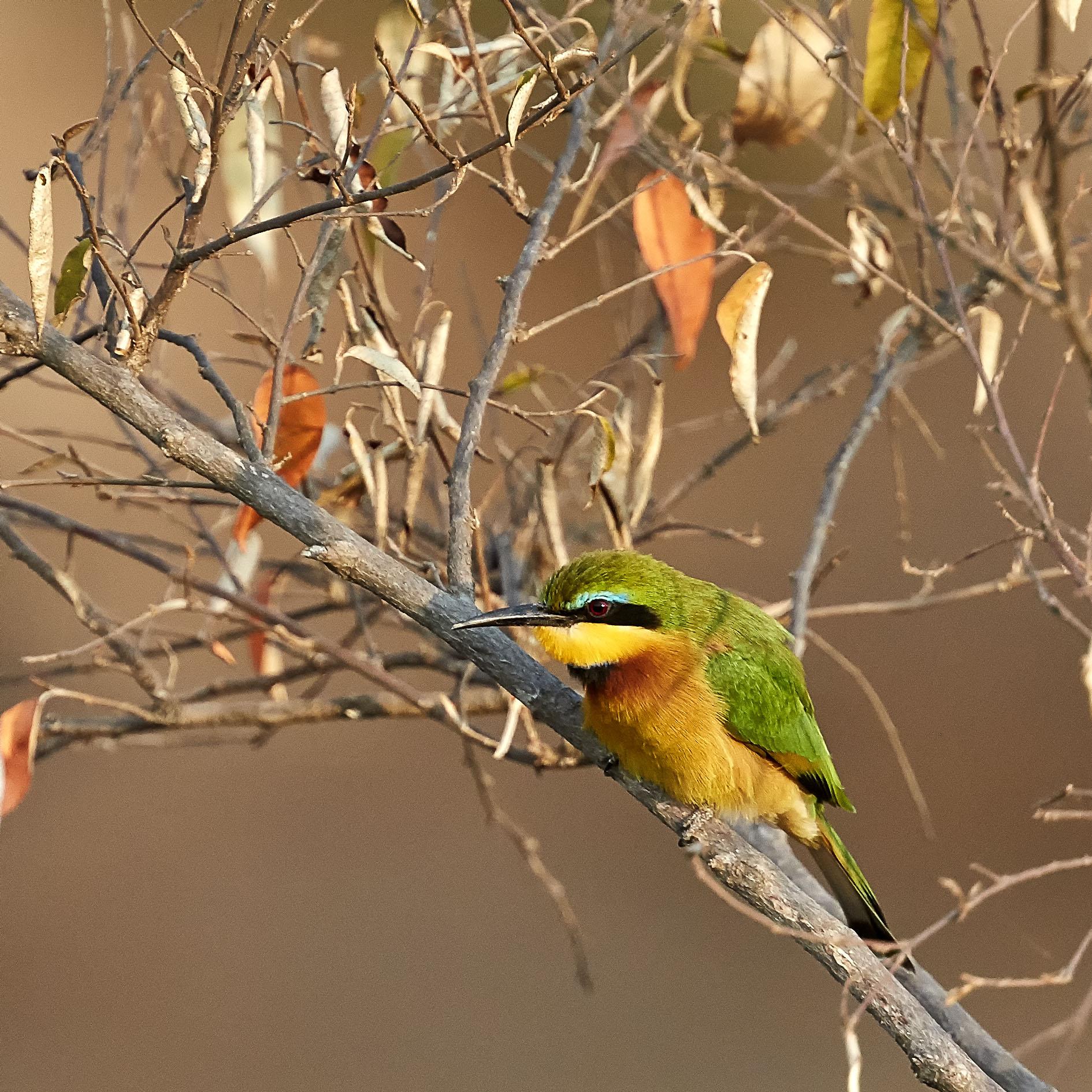 Bird2a.jpg