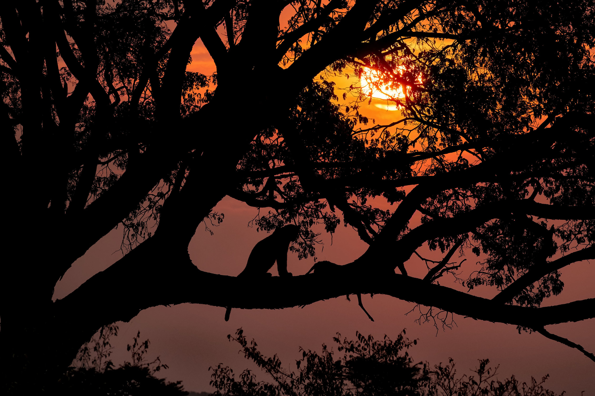 Sunrise Leopard.jpg