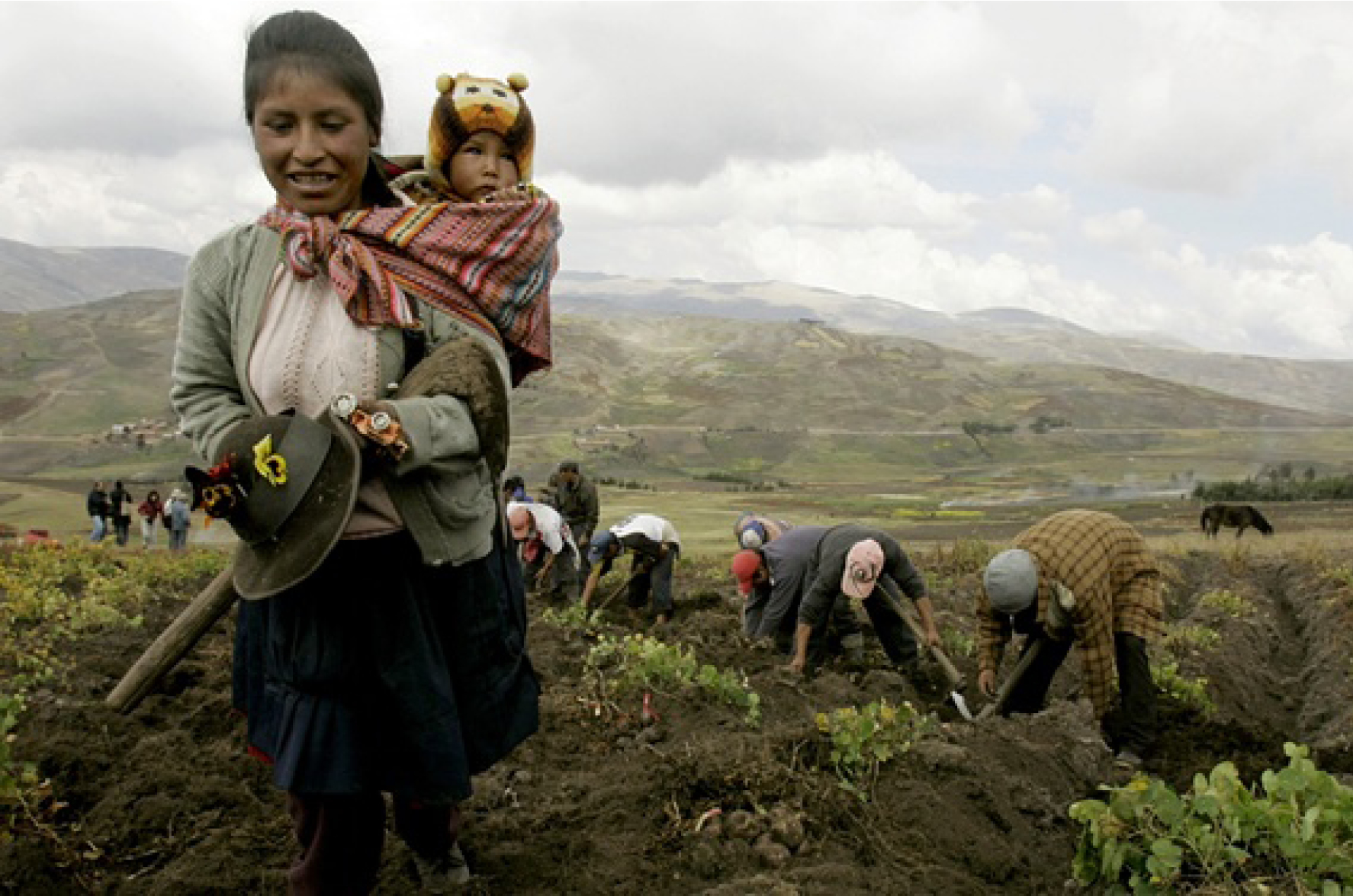 A farmer walks with her son during a potato harvest in Huancavelica, southern Peru. Smallholder farmers produce nearly 70% of all food consumed worldwide. Photograph: Martin Mejia/AP