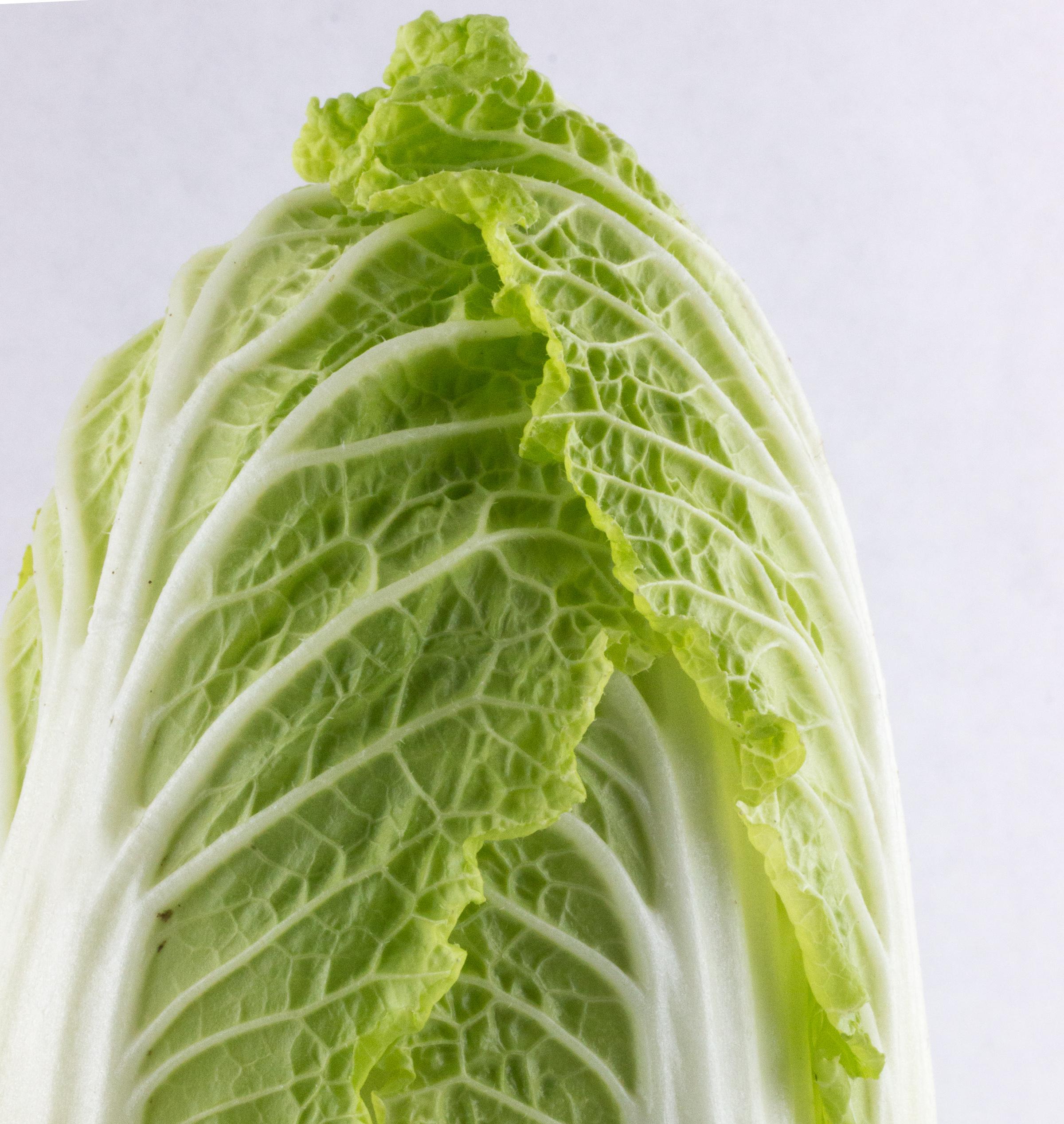 Napa Cabbage close-up
