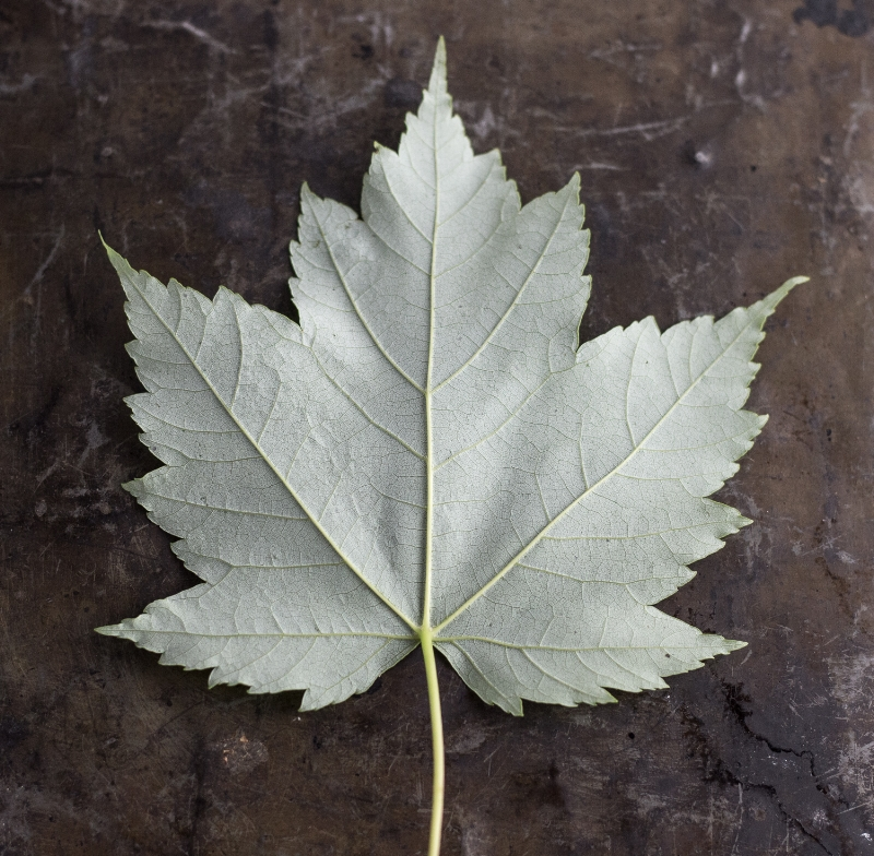 When the leaves blowbackwards.... -